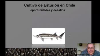 Captura de pantalla de una de las charlas de la Semana Formativa de Acuicultura Futuro Técnico
